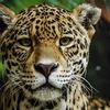 【世界生き物紀行】珍しい動物たち ~南米大陸編~