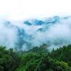 【持続可能な林業】木造高層ビルを作る人、「緑の砂漠化」森を守る人