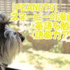 【PEANUTS】スヌーピーの漫画で英語を勉強(語彙力アップ)