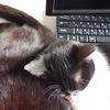 今日の黒猫モモ&白黒猫ナナのー795