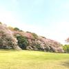 お花見公園ヨガ
