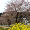 奈良県おすすめ桜(お花見)サイクリングコース~宇陀市編~