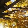 ◆奈良12月のご案内です。