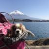 犬のメイちゃんその後2|オンライン・ペットヒーリング・身体の悩み