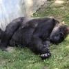 【ウクライナ】キエフ動物園はペリカンさんやで。ゆるゆるキエフ観光
