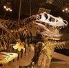 子供達にはモノより思い出をあげたい。恐竜を見に博物館へGO!