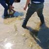 環境保全型水稲栽培技術勉強会。