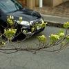 パナッシュの花たち