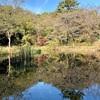 休業OLの紅葉通信【国立科学博物館附属自然教育園】手つかずの森で大人のお散歩。