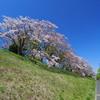 GIANT OCR3に乗って津久井~相模湖方面の桜を撮ってきた。