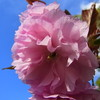 帰らなんいざ草の庵は春の風