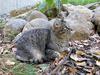 猫と金木犀