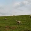 羊がちょっとメエメエいうだけの動画