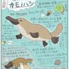 カモノハシナイト(スペシャル)