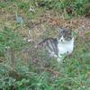 【おまじない効果?】家出から一週間、クロ猫が帰ってきました。