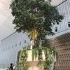 巨大な植木鉢があるカフェ【COFFEE & WINE STAND TOROCCO】