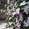 綺麗な花は香る