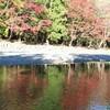 紅葉が色づく秋の伊勢神宮~四季の旅バスツアーに行ってきました