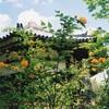 栄山寺のヤマブキ(4月後半~5月上旬)