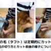 猫の足裏の毛は定期的にカットしよう!肉球周りの毛の切り方とカット前後の様子について解説