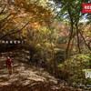 【奥多摩】御前山、奥多摩湖から歩ける初級者お勧めの紅葉の山を行く、奥多摩縦走の旅