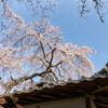 地元の桜 2021「天野山金剛寺」Ⅰ