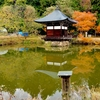 大隆寺の弁天池(仮称)(岐阜県高山)