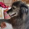 保護犬テレサと幸吉とメンバーYさん愛犬ハッピー