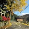 ◆'18/11/11     晩秋の鶴間池①…勘助坂を下って。