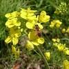 ミツバチ写真まとめ🐝