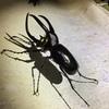 海外の昆虫採集