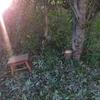 秋の庭仕事―ムスカリ他