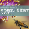 「ゼロの概念」を理解するミツバチは、やっぱり賢い