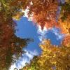 「ぶらりあか散歩 〜紅葉のカナダ 〜  」 その1