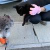寒い朝と、黒猫と