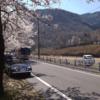 【絶景】海津大崎の桜 を見に行ってきた
