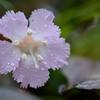 万寿山の草花
