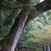 2018年11月香川旅② 初日は結局いつもどおりな、神社地味旅