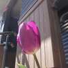 〈ほっぷ〉 チューリップの花が咲きました♪