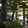 木漏れ日の森で