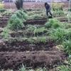 【オルかな農園報告㉓~春が来てるね!畑には草がびっしり。さといも植えました~】