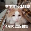 ノル猫ラテちゃんの落下事故から9ヶ月目!4月の近況報告について