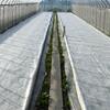 1回目種まき分の緑化成功!トラクターオイル交換。