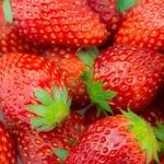 イチゴの種類をご紹介! それぞれの特徴は?