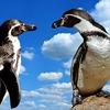 12番「鳥」のキーワードは「会話」―― ルノルマンカード占い。