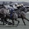 最強牝馬決定戦「エリザベス女王杯」を予想してみる。今回も外人騎手が主役なのだろうか。
