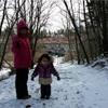 スウェーデンの森はブルーベリーだらけ。新居から徒歩3分の森を散歩してきた。