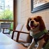 (dog) 神戸 dog cafe 2019