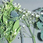お花のサブスク「FLOWER」ーツルツル世界とザラザラ世界