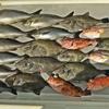 食べたい魚を釣りにいってきました~🎵  【  イサキ&カワハギ釣り / in日本海  】